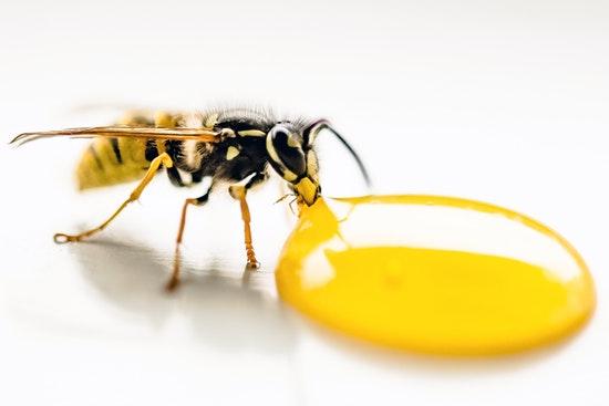 The Health Lounge Honey Bee